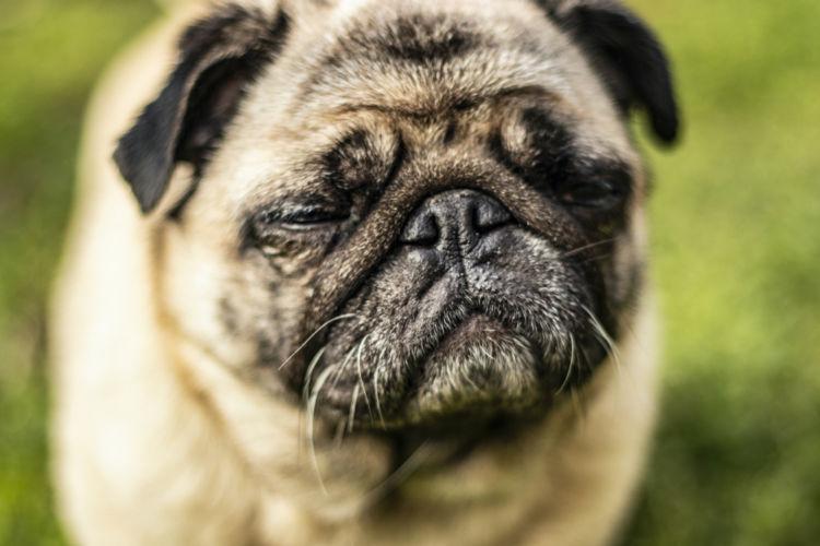 犬の結膜炎
