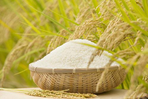 【獣医師監修】愛犬がお米を食べても大丈夫?与えて良いお米の種類や量、アレルギーは!?