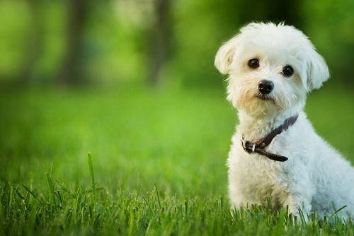 「ピーナッツ」の特長、犬への効果は?