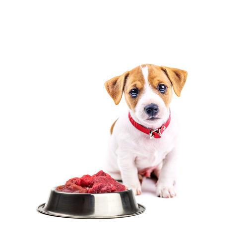 犬に与える「生肉」のまとめ