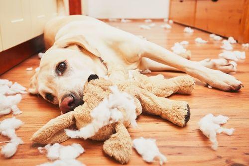 飼い主のニーズや愛犬の状態に合わせて適切なガムを選びましょう。