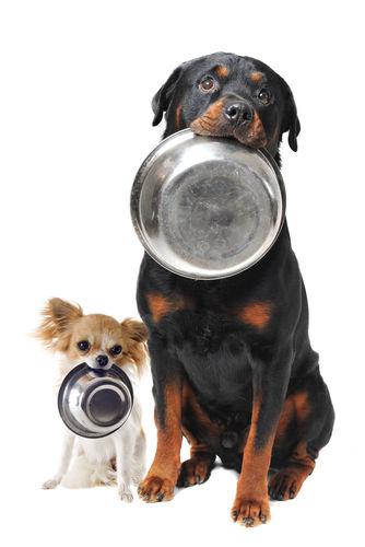体重で異なる犬の水分量