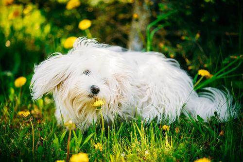 様々な地域の犬たちが原種となったのではないかという説