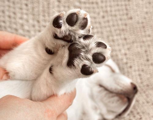 【獣医師監修】犬の足がつる。この症状から考えられる原因や病気は?