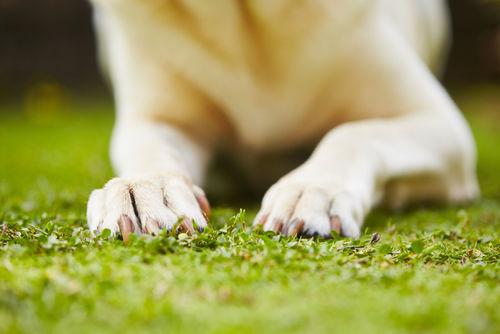 犬の足が震える・痙攣する【考えられる原因】