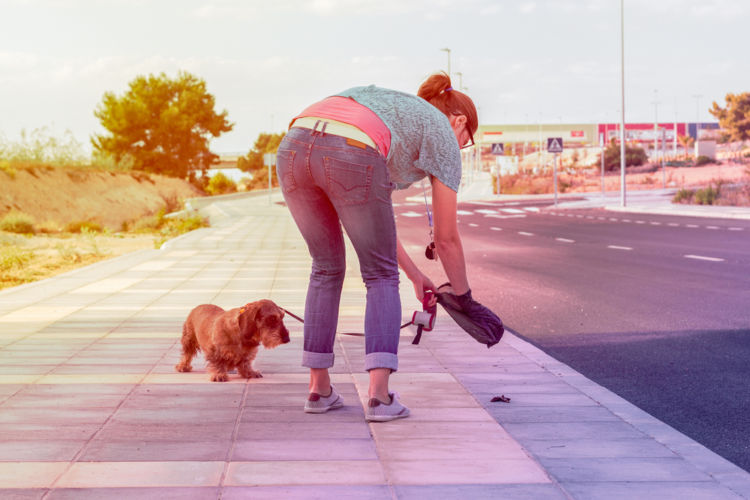 【獣医師監修】犬が下痢をした・うんちがゆるい。この症状から考えられる原因や病気は?