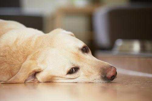 犬が下痢をした・うんちがゆるい【考えられる原因】