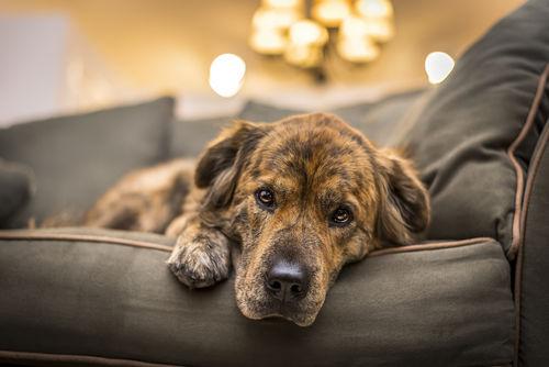 犬が血便をだしている【この症状で考えられるおもな病気】