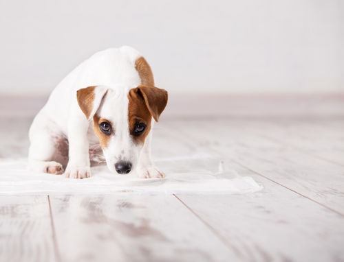 犬が粘液便をした【考えられる原因・病気は?】