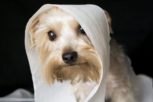 犬が粘液便をした【応急処置や対処法、予防方法は?】