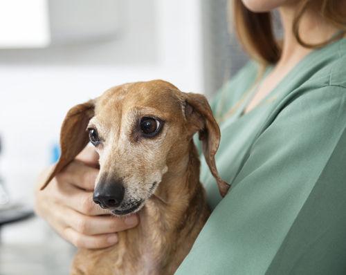 犬が粘液便をした【人間用の市販薬を飲ませても大丈夫?】