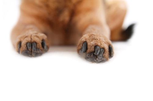 足の爪が伸びすぎている、巻き爪になっている