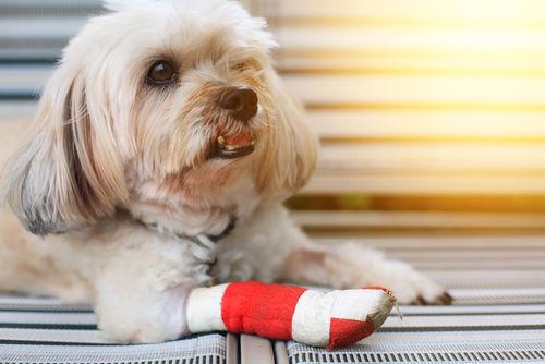 怪我や筋肉・骨・関節の疾患