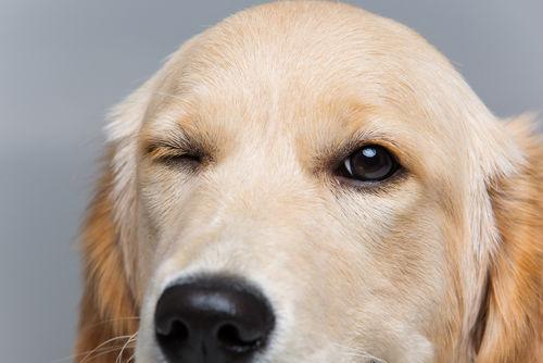 網膜や視神経の障害
