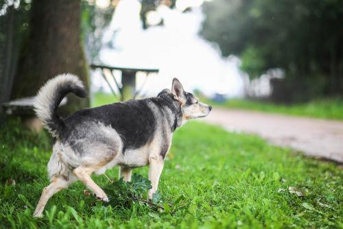 犬の慢性腎臓病