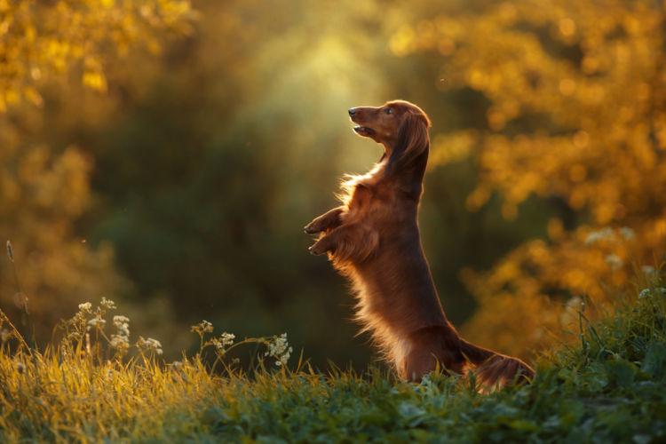 【獣医師監修】「犬の消化器型リンパ腫」原因や症状、なりやすい犬種、治療方法は?