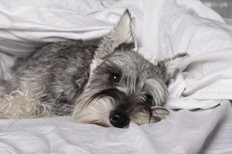 犬の慢性腎不全(慢性腎臓病)【症状】
