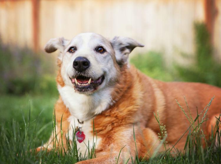 犬の慢性腎不全(慢性腎臓病)【予防対策】