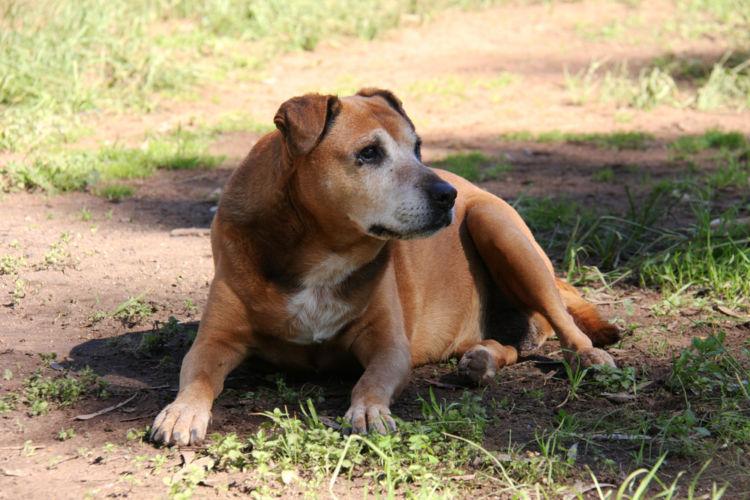 犬の白内障の種類