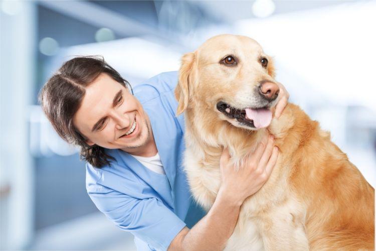 犬の白内障と間違えやすい病気