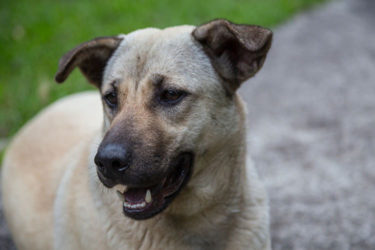 犬の緑内障【症状】