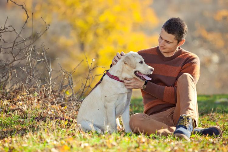犬の緑内障【治療方法】