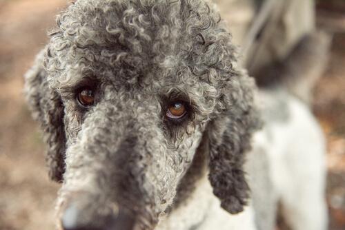 【獣医師監修】犬の後肢がピーンと張ったら要注意!膝関節の脱臼かも