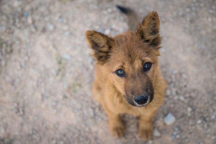 犬の眼振・目が揺れている【この症状で考えられるおもな病気】