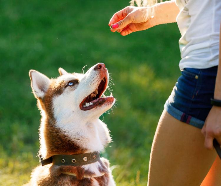 犬のおやつにクッキーがおすすめな理由!丸飲み注意!