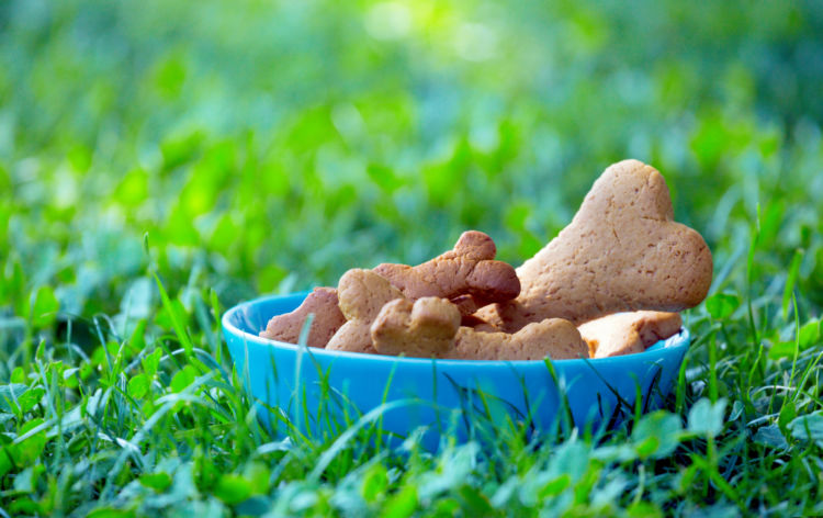 愛犬に与えるクッキー(市販)選びのポイント!