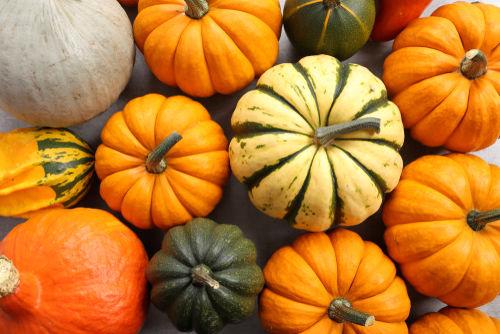 食べて大丈夫な野菜⑪【かぼちゃ】