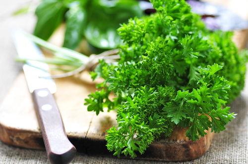 食べて大丈夫な野菜㉓【パセリ】