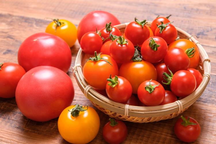 【獣医師監修】犬がトマト(生)を食べても大丈夫?トマチン中毒「花・葉・茎」に要注意!適量は?