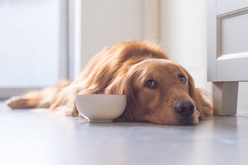 犬にきゅうりを与える時の【注意点!】(食べすぎ)