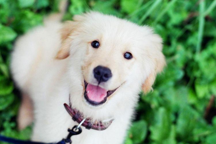 愛犬 健康