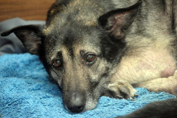犬が下痢をした・うんちがゆるい【この症状で考えられるおもな病気】