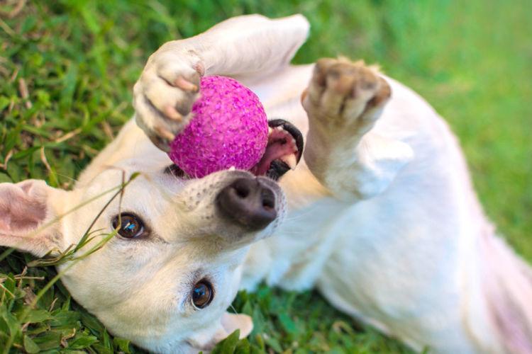 犬の歯髄炎【予防対策は?】