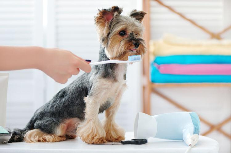 犬の歯周病【予防対策】