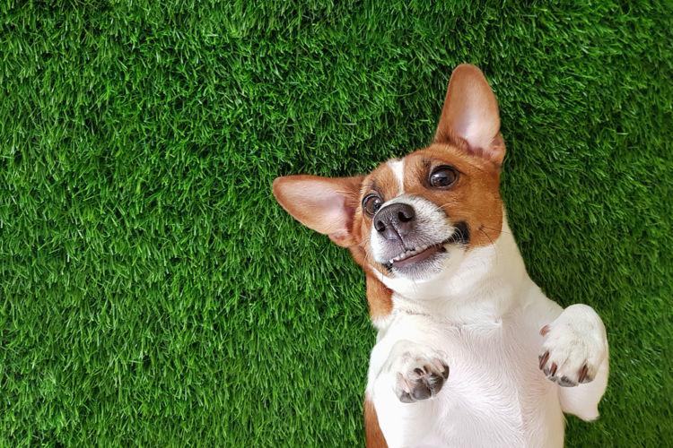 犬の歯周病と間違えやすい病気