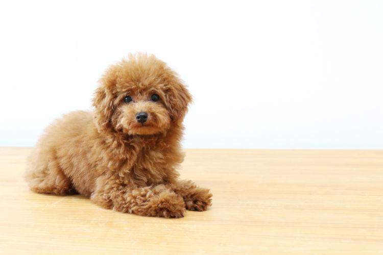 【獣医師監修】「犬の扁平上皮癌」原因や症状、なりやすい犬種、治療方法は?