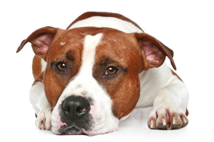 犬の血管肉腫と間違えやすい病気
