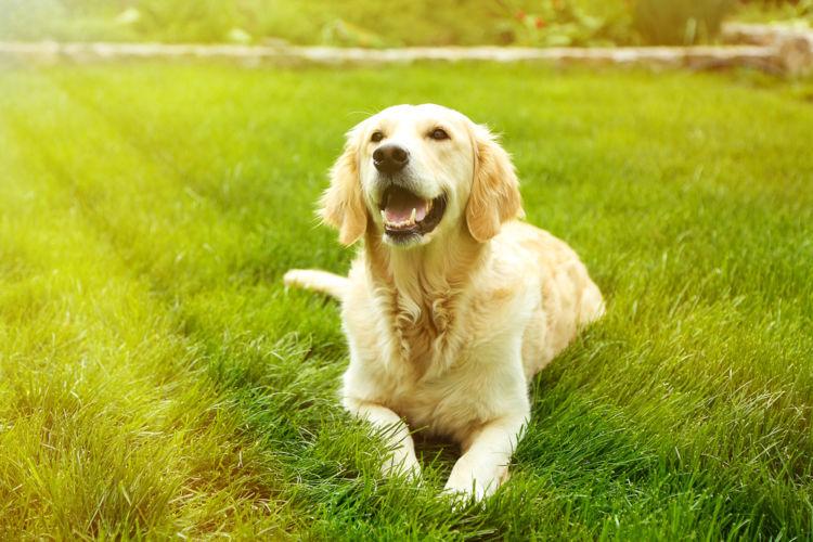 犬の扁平上皮癌【原因】