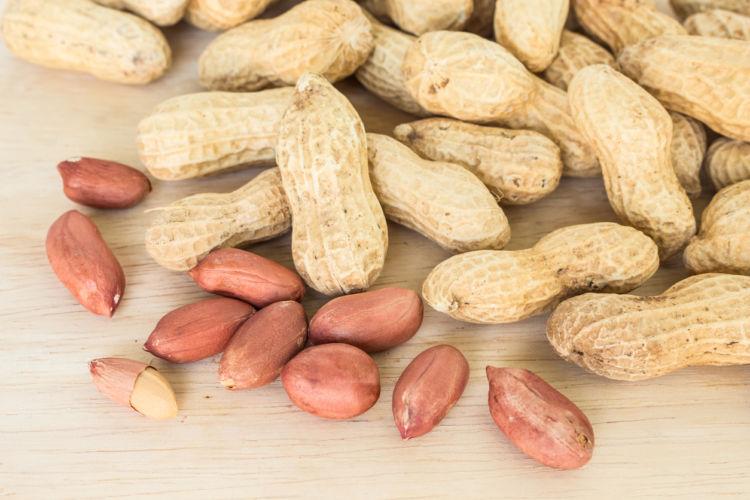 【獣医師監修】犬がピーナッツを食べても大丈夫?アレルギーや中毒、薄皮や殻はダメ?チョコ入りに注意!