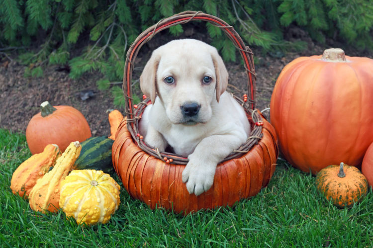 【獣医師監修】犬がかぼちゃ(生)を食べても大丈夫?かぼちゃの種や皮には注意が必要!
