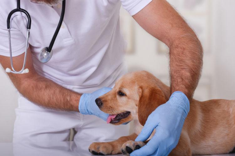 【獣医師監修】犬のリンパ節が腫れる。考えられる原因や症状、おもな病気は?