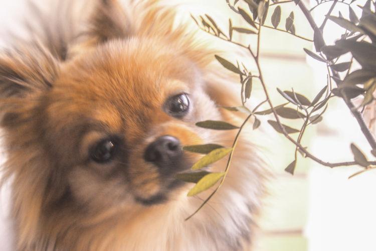 かぼちゃを与えることで愛犬を健康管理