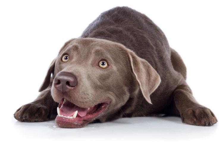犬の内歯瘻(ないしろう)【間違いやすい病気は?】