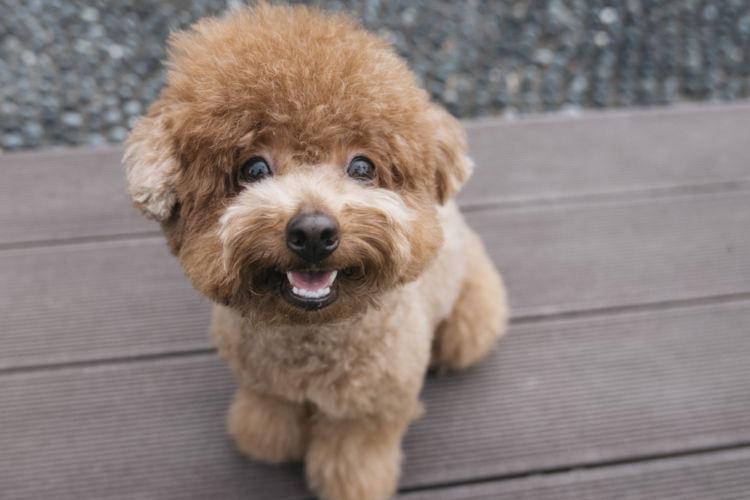 犬の外歯瘻(がいしろう)【間違いやすい病気は?】