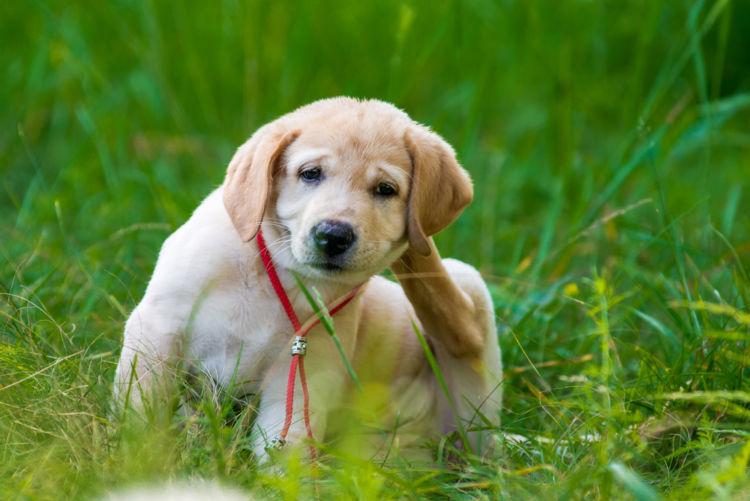 犬の中耳炎とは