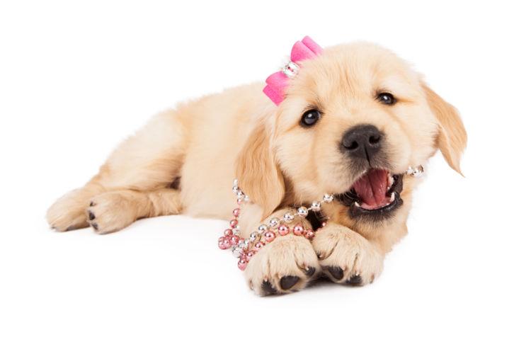 【獣医師監修】犬の膣(ちつ)から出血している。考えられる原因や症状、おもな病気は?